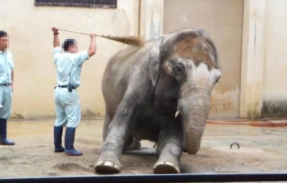 PETITION Free Himeko the Elephant from Solitary