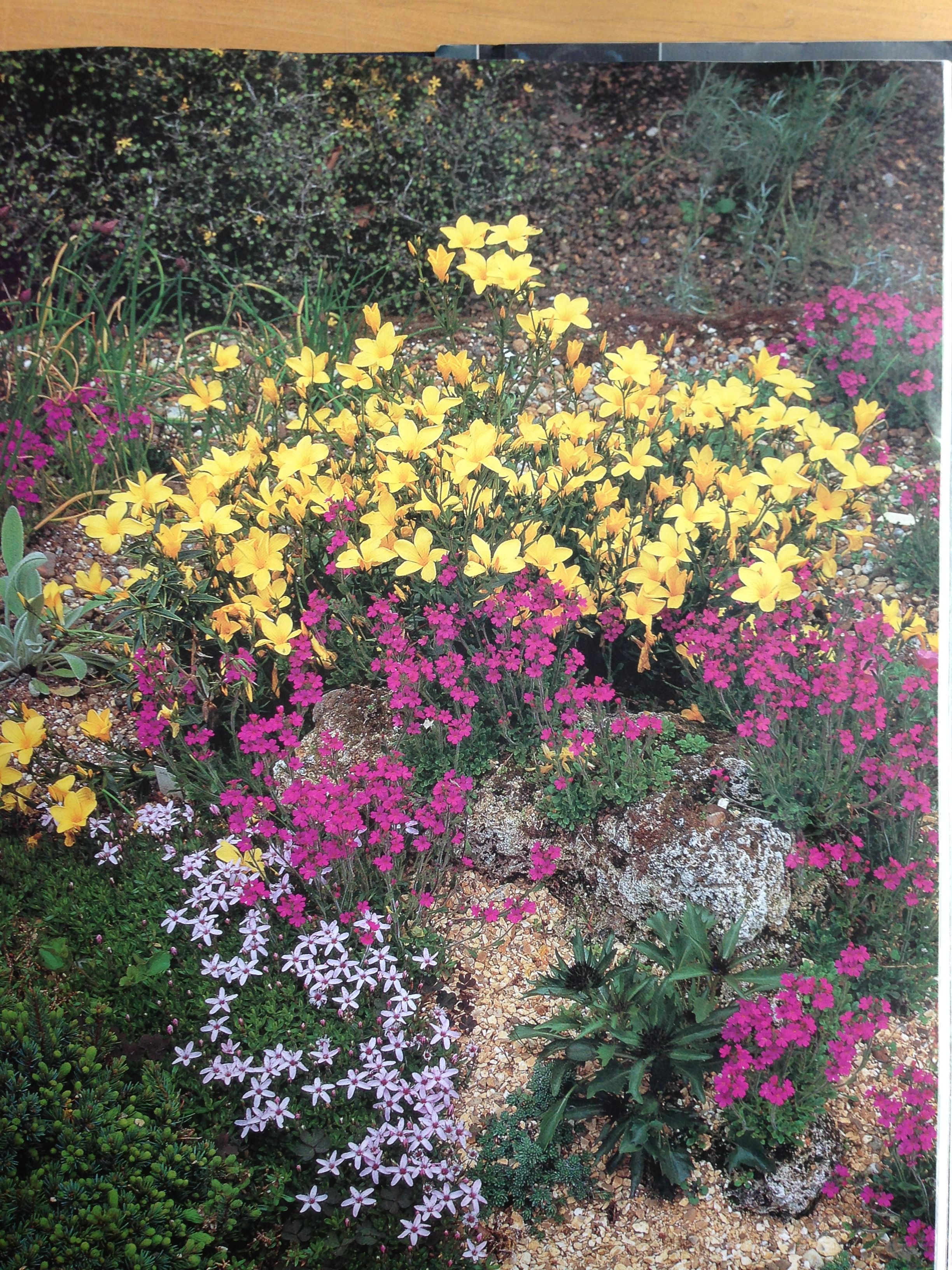 Rock garden flowers garden pinterest for Flowers landscape gardening