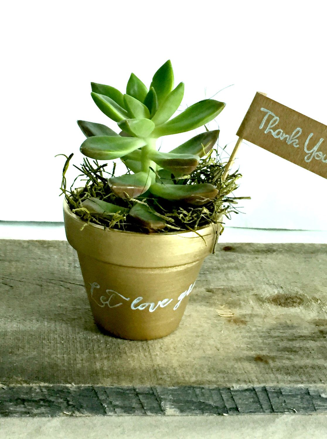 set of 25 gold pots with let love grow diy succulent favors clay