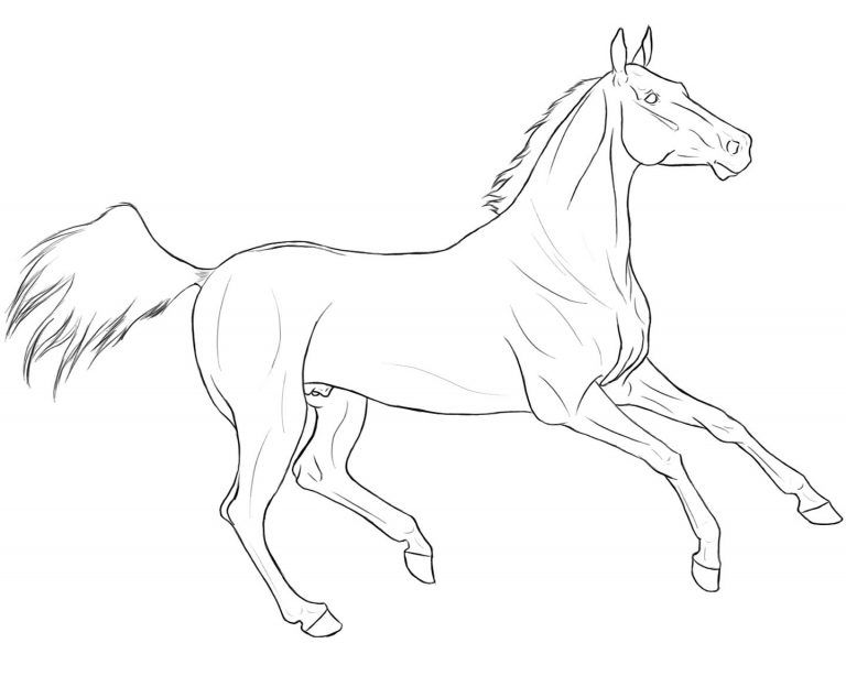 Akhal Teke Lineart Google Search Horse Coloring Pages Horse