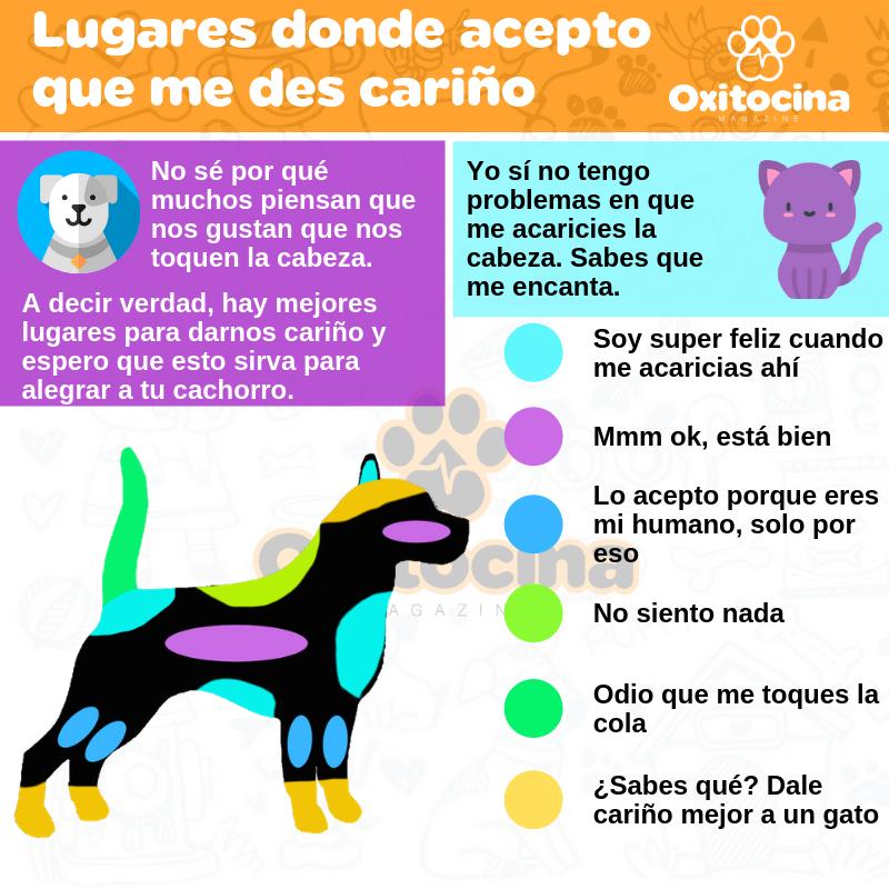 En Estos Lugares Puedes Darle Carino A Tu Perro En 2020 Consejos Para Mascotas Alimentacion Perros Gatos Y Perros Lindos