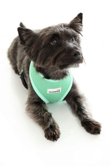 Doodlebone Mint Green Dog Harness Dog Harness Dogs Small Dogs