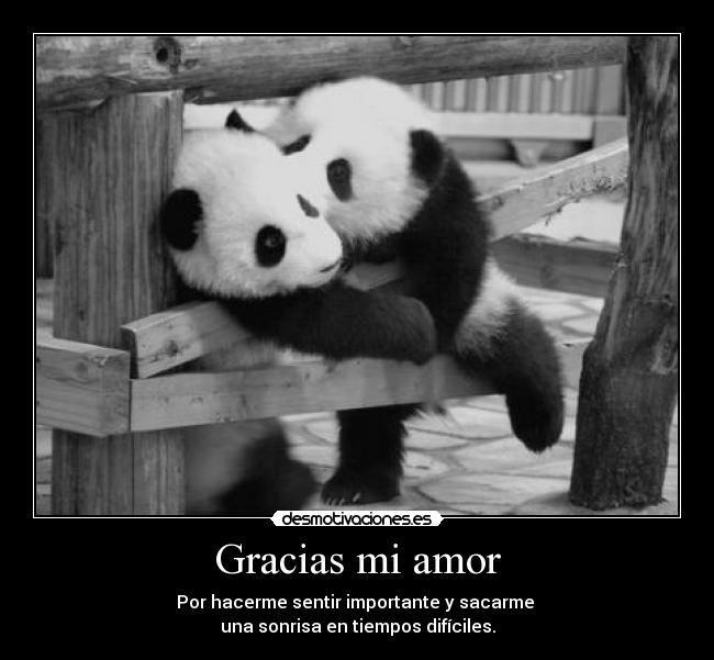 Resultado De Imagen Para Mi Amor Perros Oso Pandas Osos De Peluche