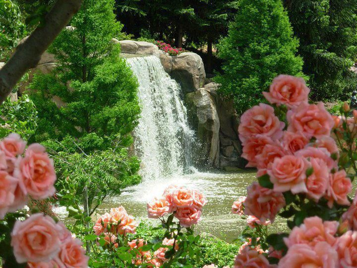 Rose waterfall water falls pinterest patio for Diseno de cascadas para jardin