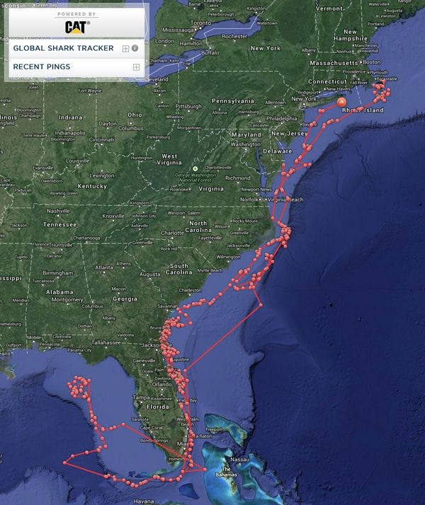 great White Shark KATHARINE returning to Cape Cod