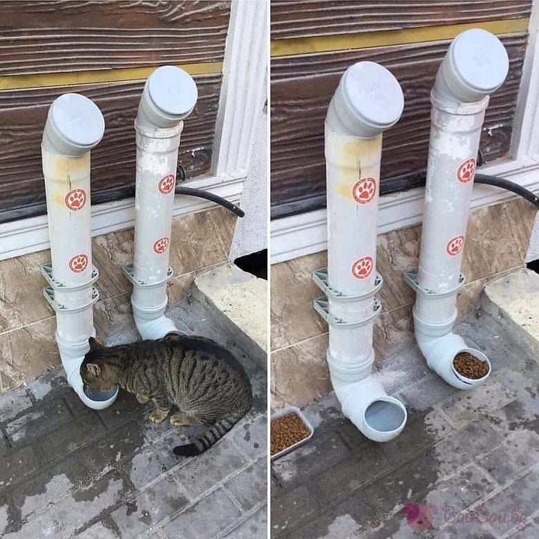 Adding Water Tubes And Dry Food To Feed Stray Cats In