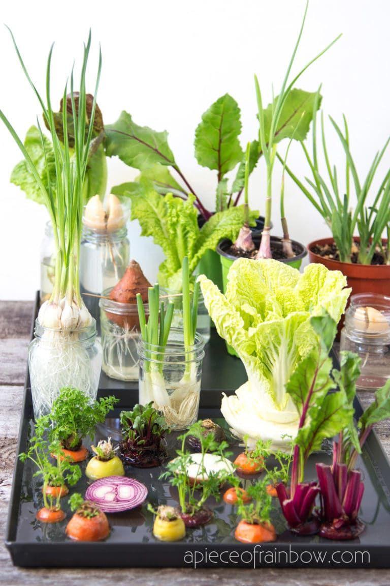 12 Best Veggies Herbs To Regrow From Kitchen Scraps Windowsill Garden Regrow Vegetables Vegetable Garden Diy