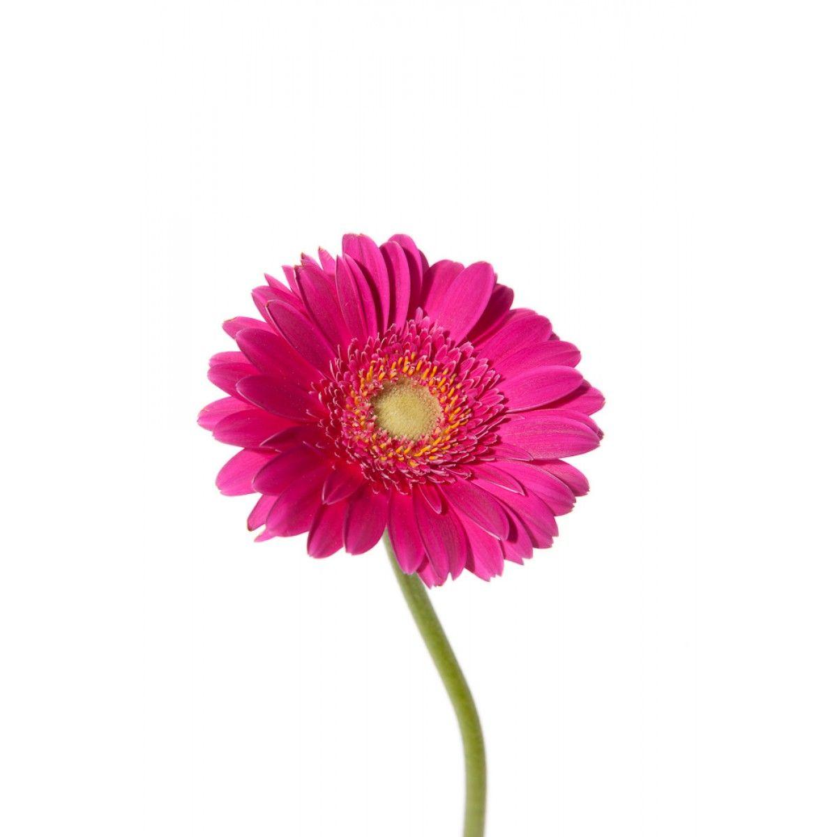 Top 46 Beautiful Pink Flowers For Your Garden Pinterest