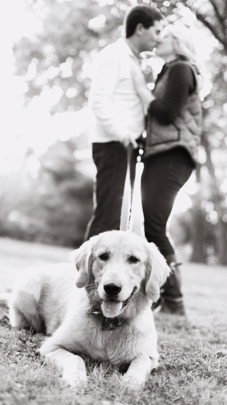 Golden Retriever and his Humans! Engagement Photo!! | Wedding <3 ...