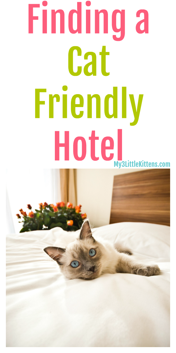 Finding A Cat Friendly Hotel Cat Friendly Hotels Pet Friendly Hotels Cats