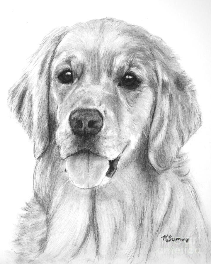 Pin De Midori Singularity En Ropa Perros Dibujos De Animales