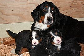 Basic Canine Anatomy Dog Anatomy Dogs Sick Dog
