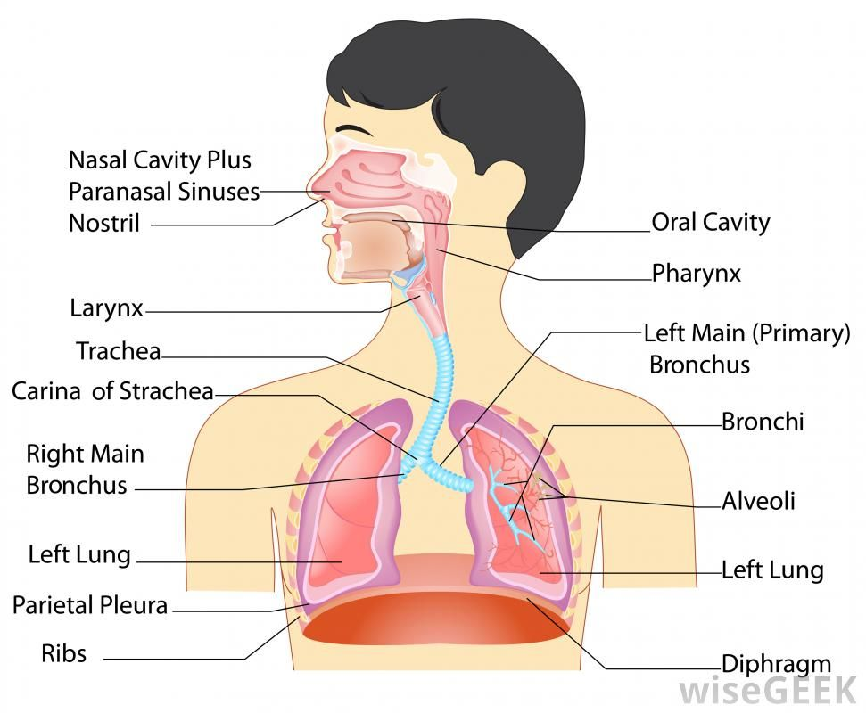 what is nostril - Google Search | Visual dictionary | Pinterest ...