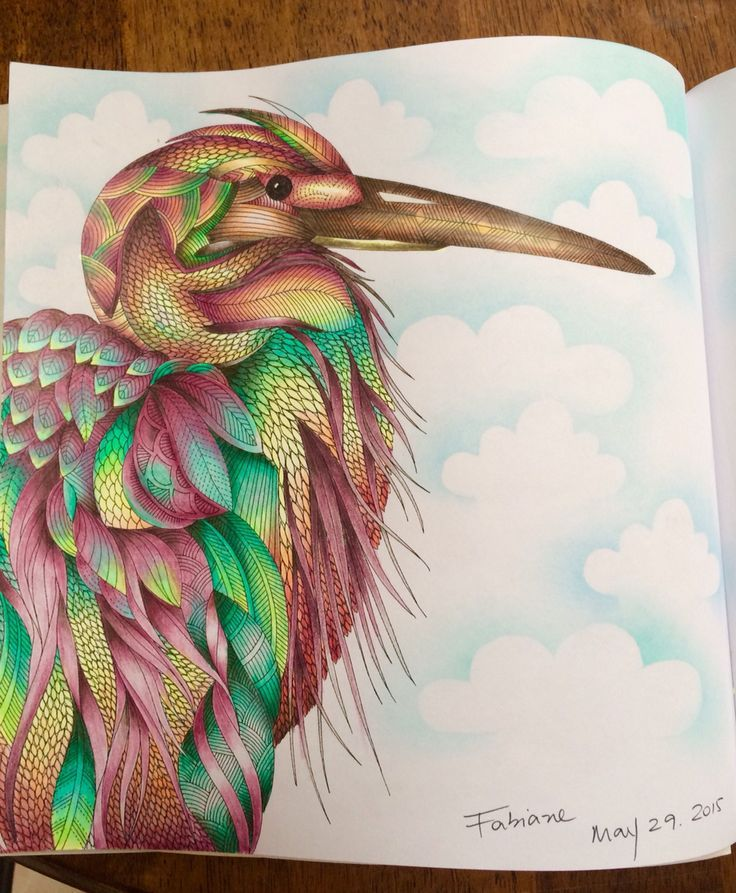 Explore Adult Coloring Books And More Millie Marotta