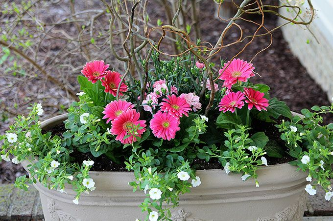 5 Easy Steps To Beautiful Garden Planters Container Flowers