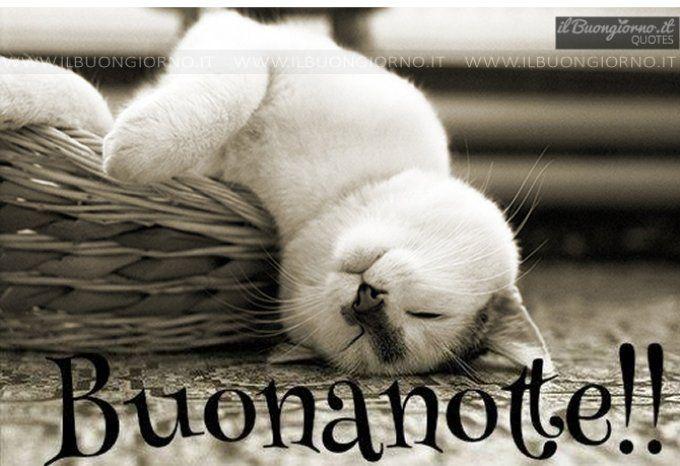 Buonanotte Buon Giorno Gatos Dulces Sueños E Animales Graciosos