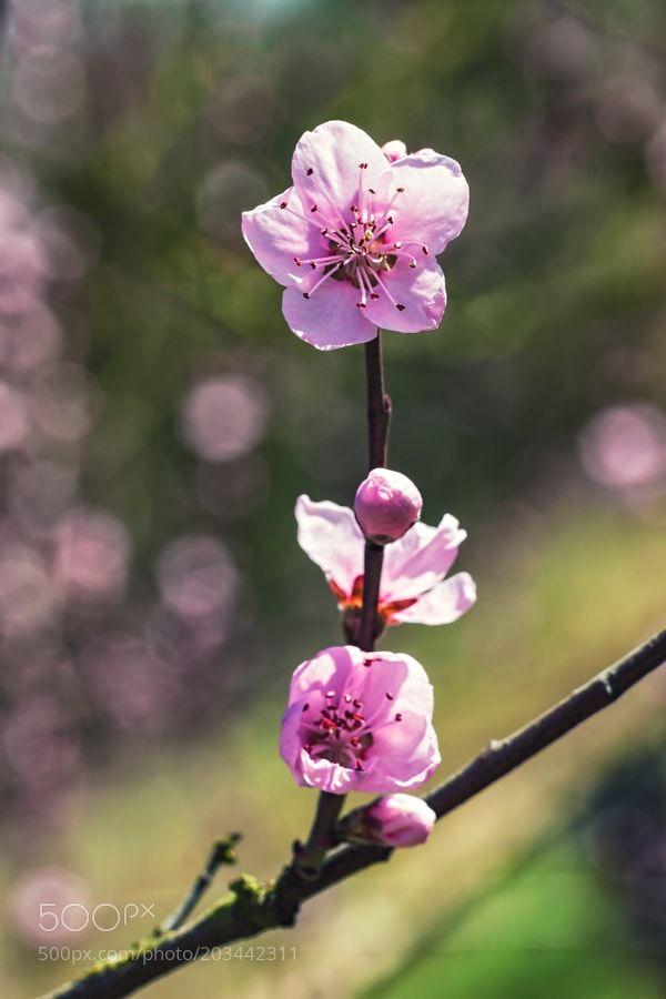 V La Le Printemps By Aubry Lionel Macro Photography Flowers Flowers Photography Beautiful Flowers