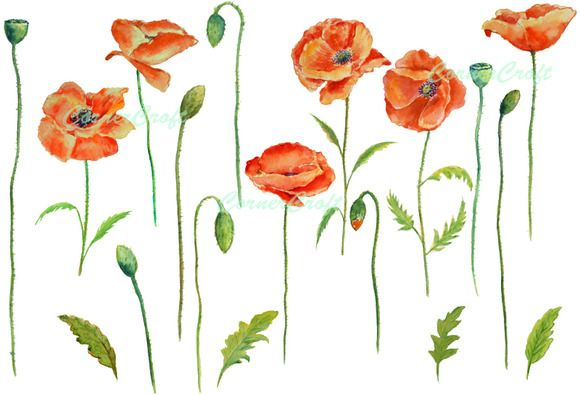 Watercolor red poppy clip art poppy clips and watercolor check out watercolor red poppies clip art by corner croft on creative market mightylinksfo