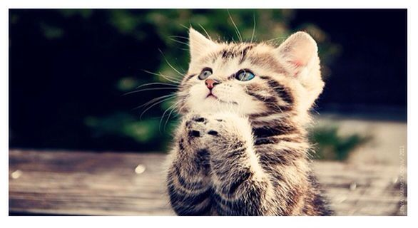 God Bless us...everyone Kittens cutest, Cute cats, Cats