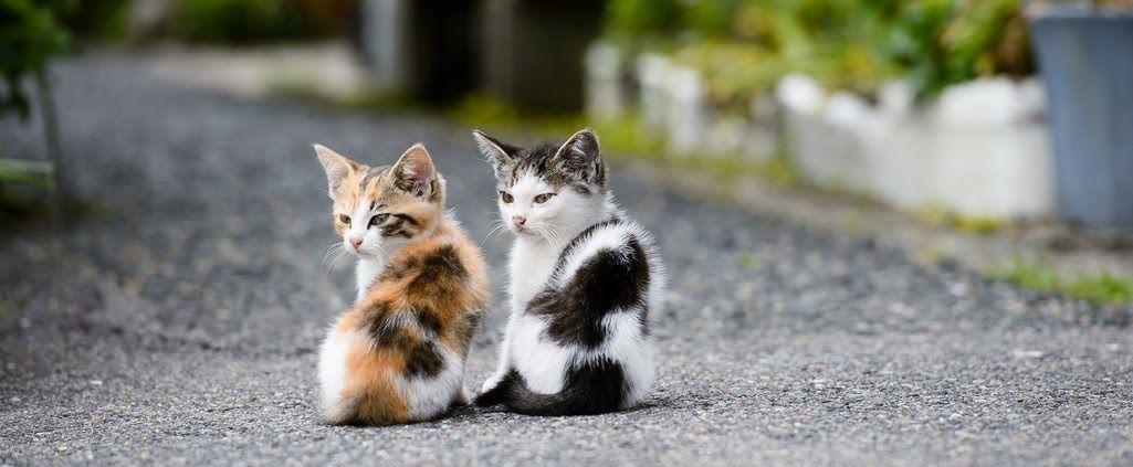 Wallpaper Kucing Hitam Keren Gambar Kucing Paling Lucu Dengan Ekspresi Paling Menggemaskanitu Yang Ada Cari Termasuk Admin Di 2020 Kucing Kucing Hitam Gambar Hewan