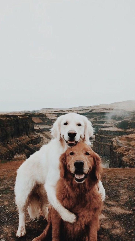 Pin Von Pia Adams Auf Tiere Tiere Hund Tiere Flauschige Tiere