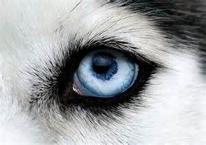 eye animal - Yahoo Search Results Yahoo Image Search results