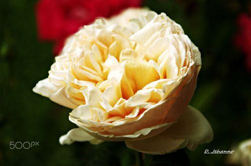 Happy birthday Delores !! | by DanielJehanno |...