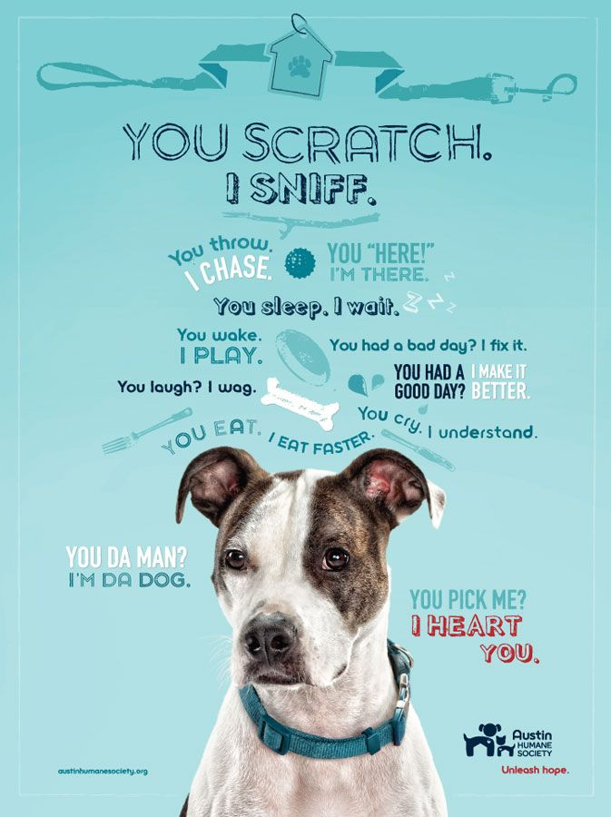 Superb ... You Scratch I Sniff : Poster/print Campaign Created By Agency Door  Number Shows Potential Adopters How Fulfilling Life Can Be With An AHS Dog  Or Cat. And Pet Poster