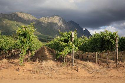 Stellenbosch...the best Wine region in South Africa