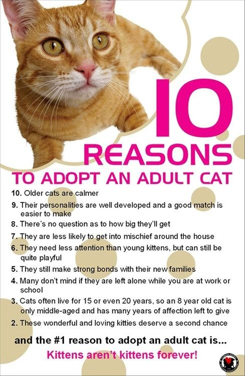 Reasons To Adopt A Cat Vs Dog