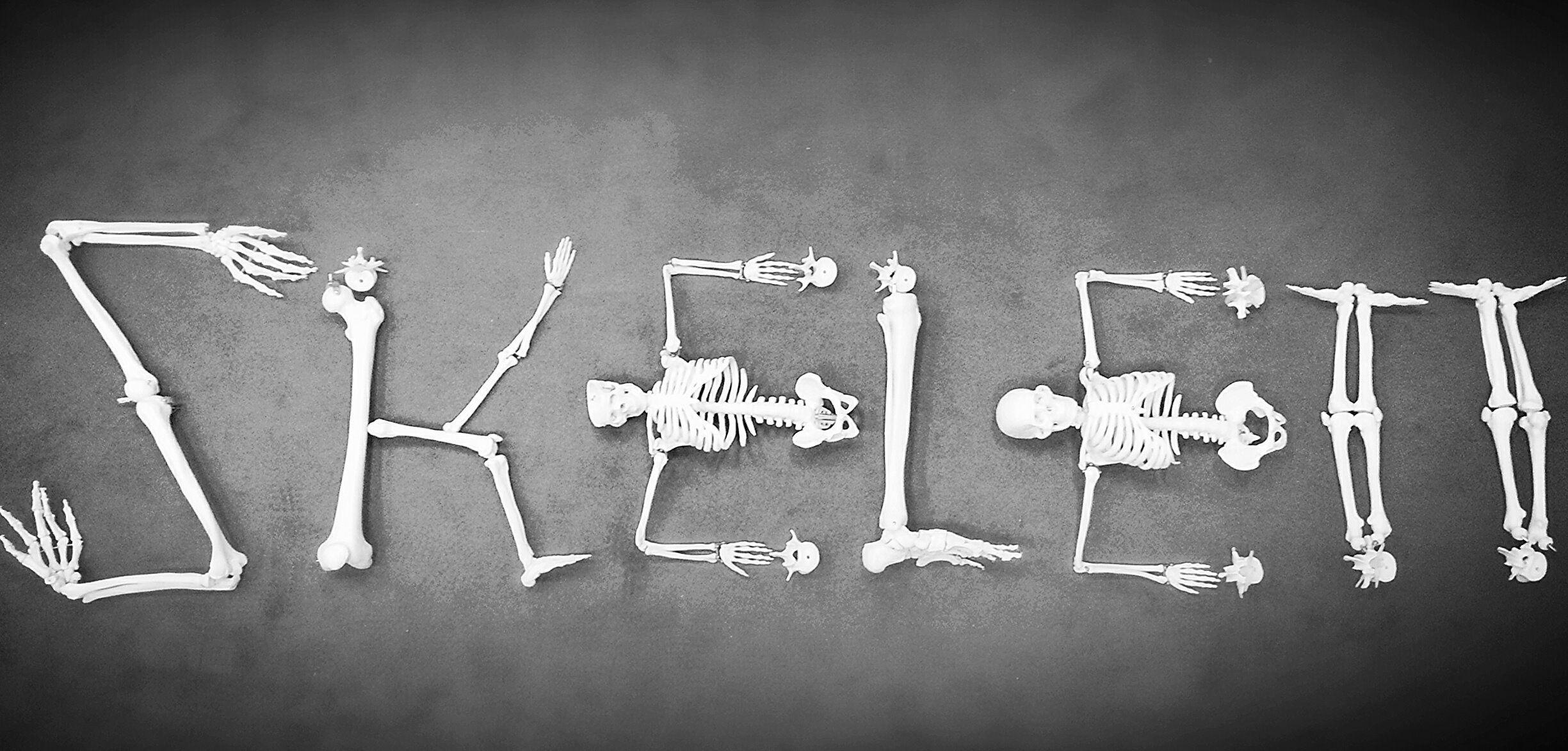 Erfreut Muskel Skelett Anatomie Malbuch Galerie - Malvorlagen Von ...