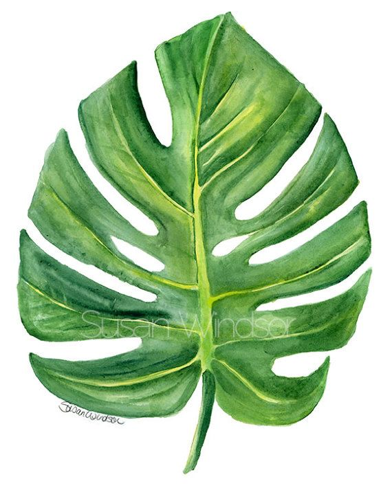 Monstera Leaf Watercolor Painting 8 X 10 Giclee Print 8 5x11