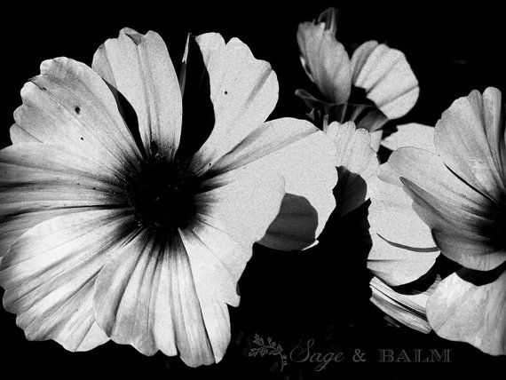 Black white floral black and white flower moody floral photography print dreamy romantic dramatic wall art photo print