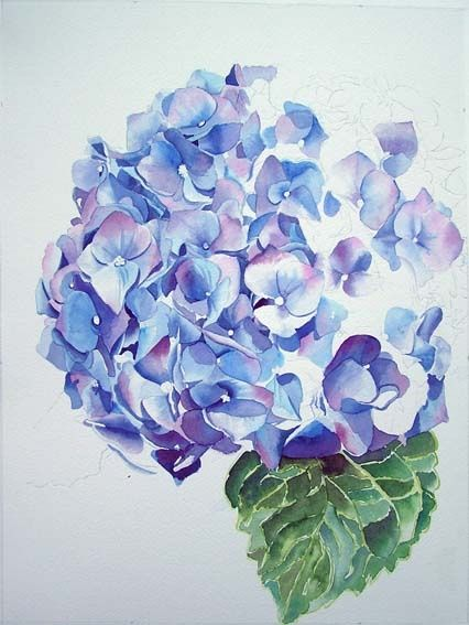 Cat In Watercolor Kitten Cat Painting And Blue Hydrangea Painting In Progress Hydrangea Painting Flower Art Flower Painting