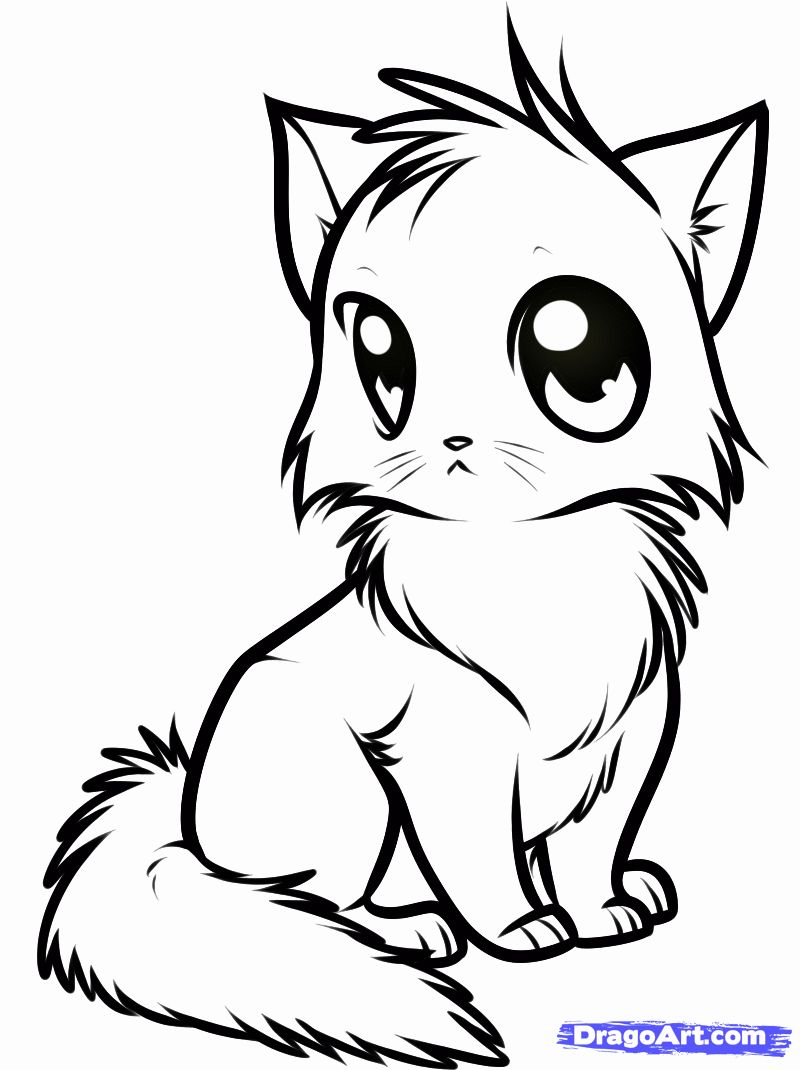 Chibi Animals Coloring Pages New Dragoart Cute Animal Coloring Pages 800 1070 In 2020 Animals Drawing Images Animal Drawings Cute Anime Cat