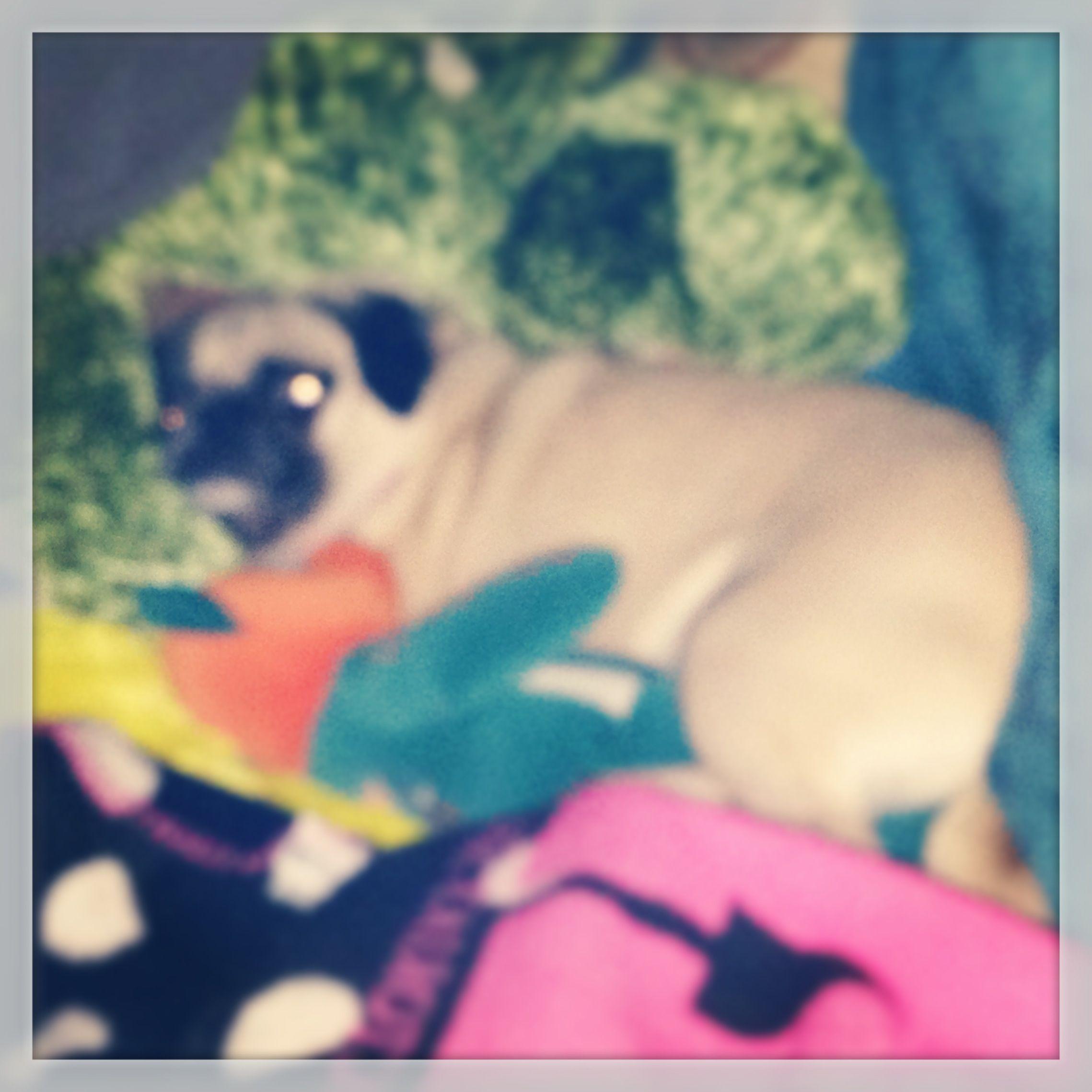 I think she's comfy :) pugs