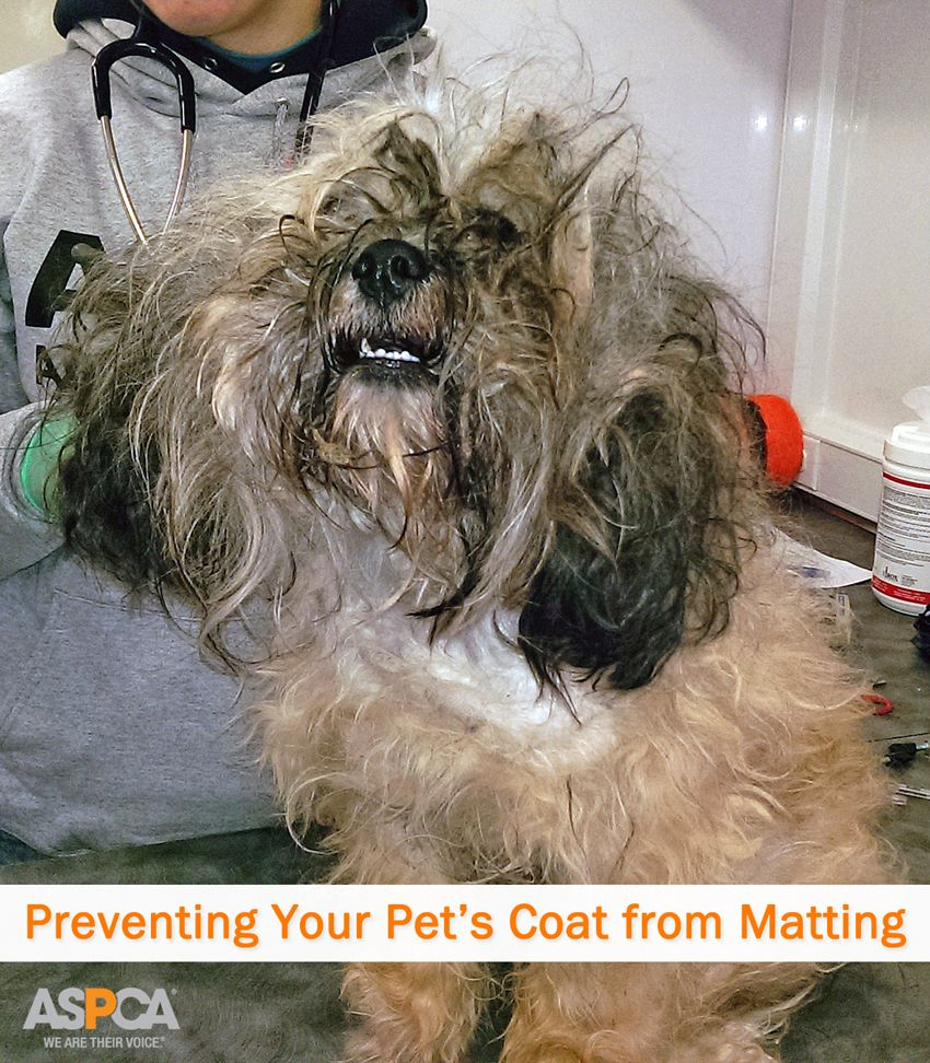 A Haircut Could Save A Life Preventing Your Pet S Coat From