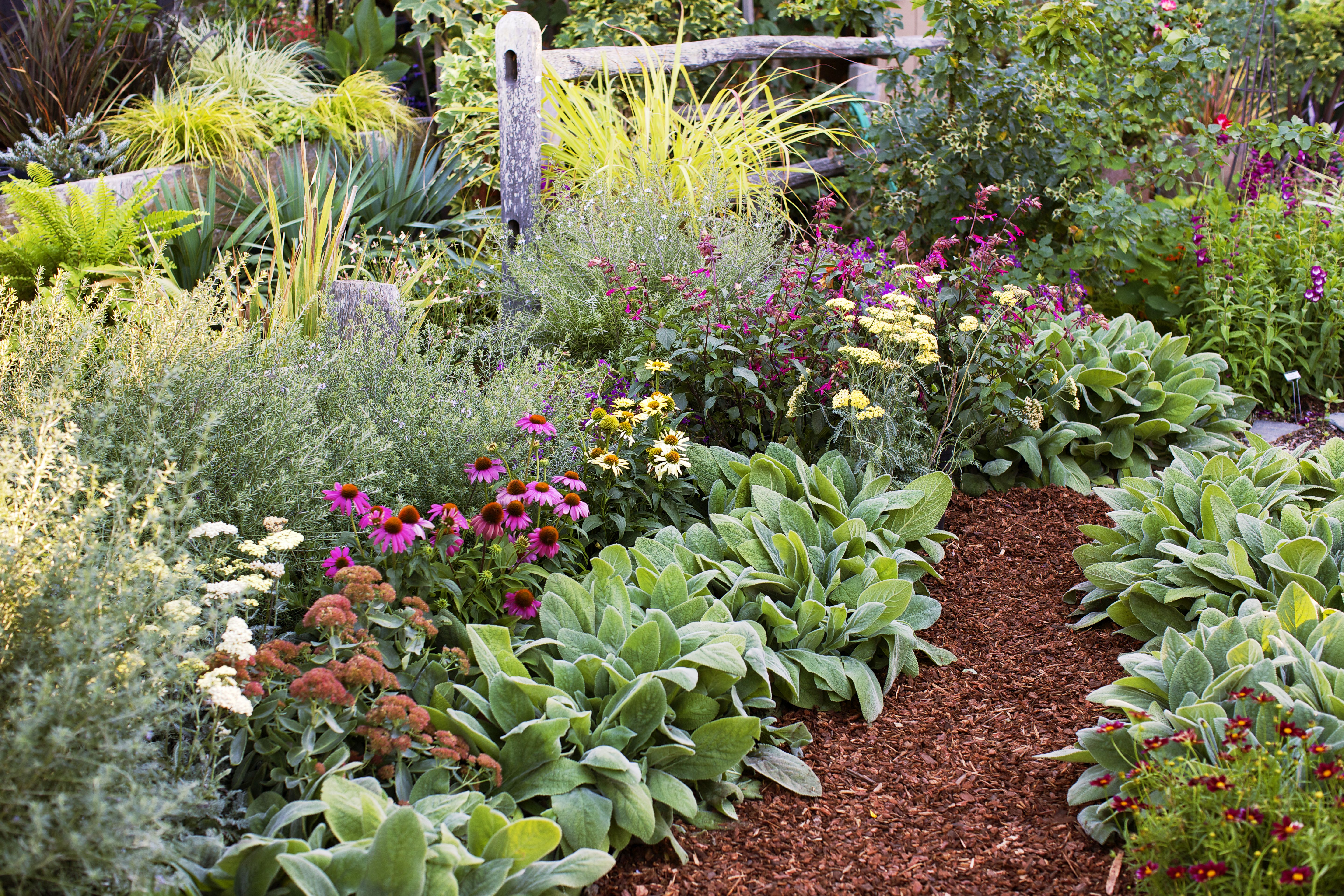 4 Easy Care Flower Bed Ideas Long Blooming Perennials