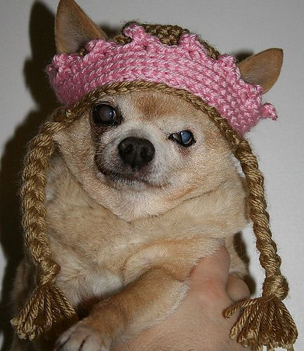 Chihuahua Queen Hat