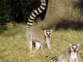 1a9b195c4e2170685980efd002633b82 - Louisiana Purchase Gardens & Zoo Monroe La