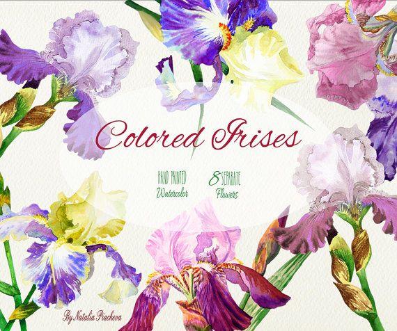 Colored Irises Hand Painted Digital Watercolor Clip Art Watercolor Clipart Clip Art Digital Watercolor