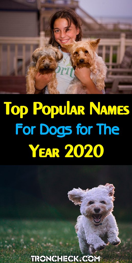 Top 100 Most Popular Names Male And Female Dogs In The World For The Year 2020 Top Dog Names Girl Dog Names Female Pet Names
