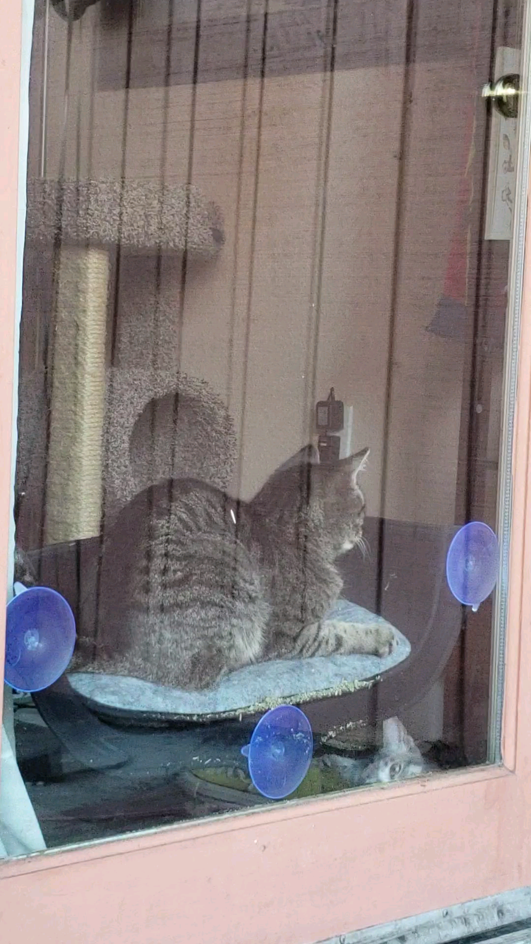 Window bed for cats  this kitty who loves her catnip and new window bedift