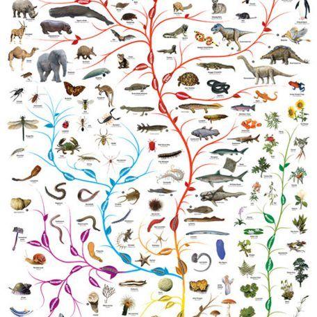 Tree Of Life Poster 12 99 Description 24 X 36 Tree Of Life