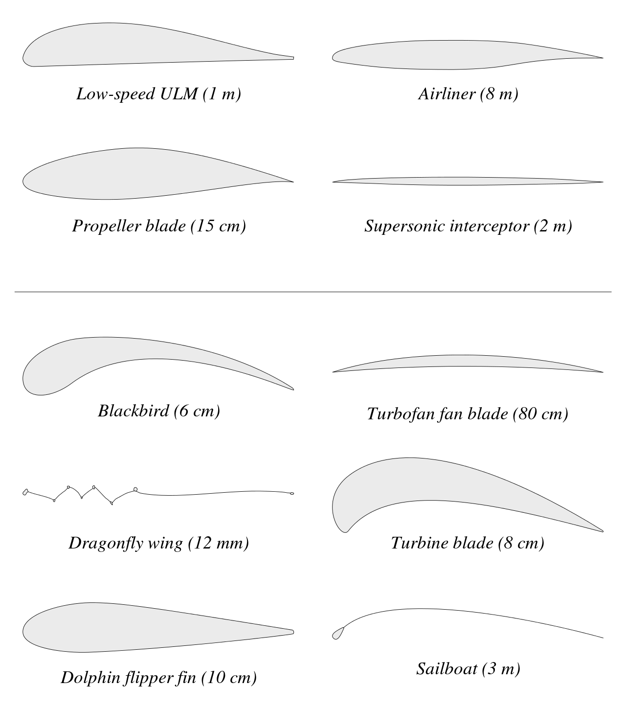 Examples of airfoils in nature and within various vehicles