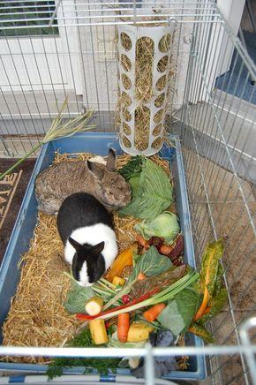 Stubenreinheit In 2020 Mit Bildern Kaninchen Kaninchengehege