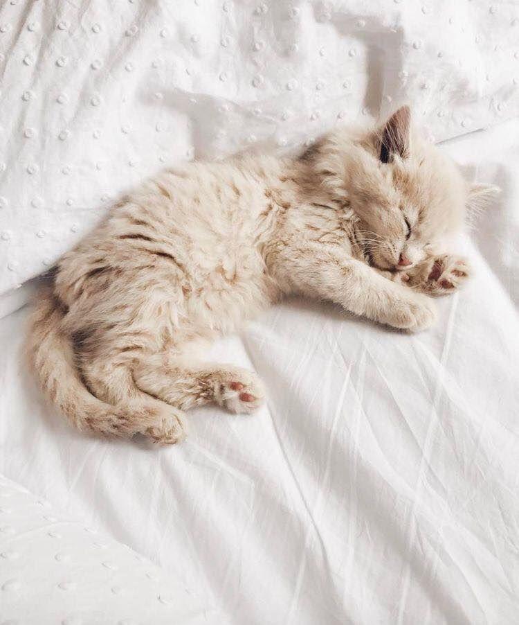 Pin By Brittany Kozura On Furryfriends Kittens Cutest Newborn Kittens Kitten Care