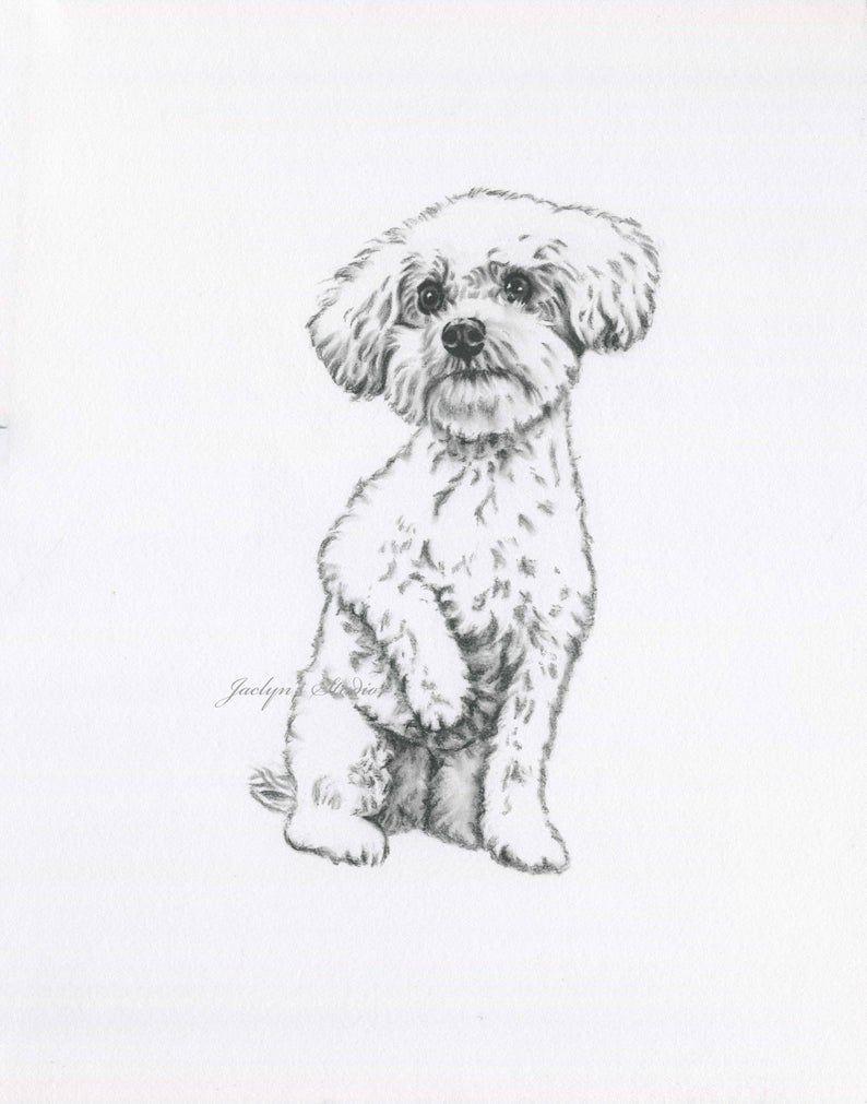 Bijon Art Bijon Drawing Original Drawing Bijon Sketch Dog Art Dog Drawing Dog Sketch En 2020 Dibujos De Perros Dibujos Faciles De Perros Dibujo De Perro