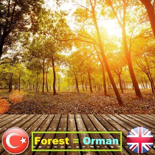Forest Orman Okunusu Forist