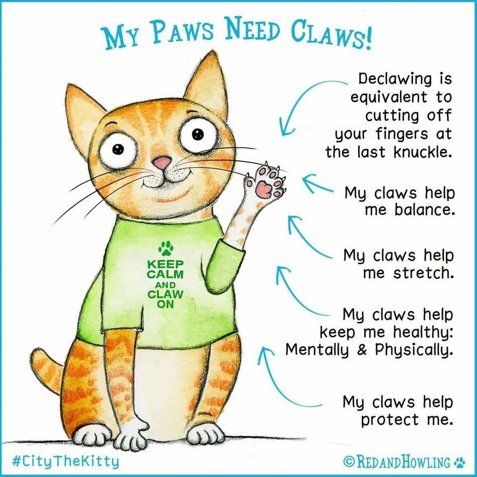 Best Tips And Info On How To Trim Your Cats Nails Paws And Claws Feline Cat Claws